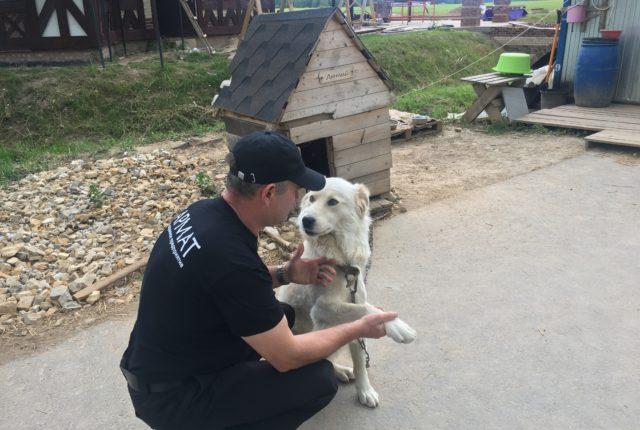 Охрана объектов с использованием служебных собак